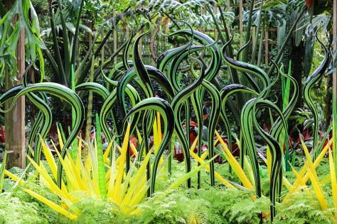 Chihuly Black and Green Stripe Herons with Icicle Clusters (2015) in the Fuqua Orchid Center