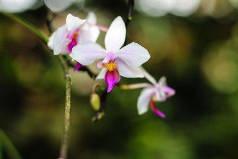 Orchid-Closeup-1-LR