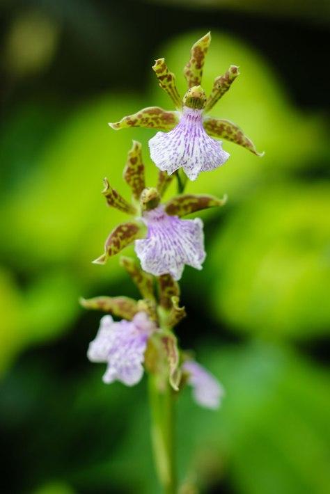 Orchid-Closeup-2-LR