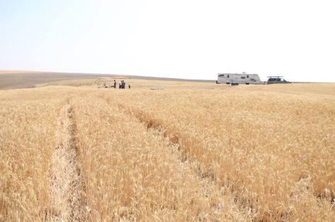 5kidsandarv_wheatfield