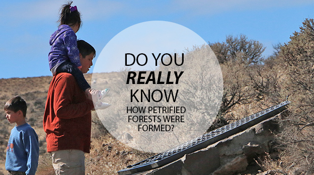Do you REALLY know how petrified forests are made?