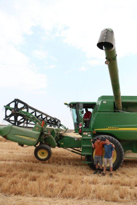 wheat-harvest-washington-combine