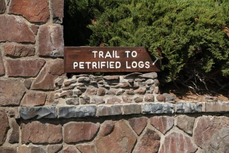 petrified-log-trail-forest-vantage-washington