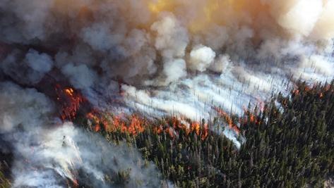 web-forest-fire-blaze